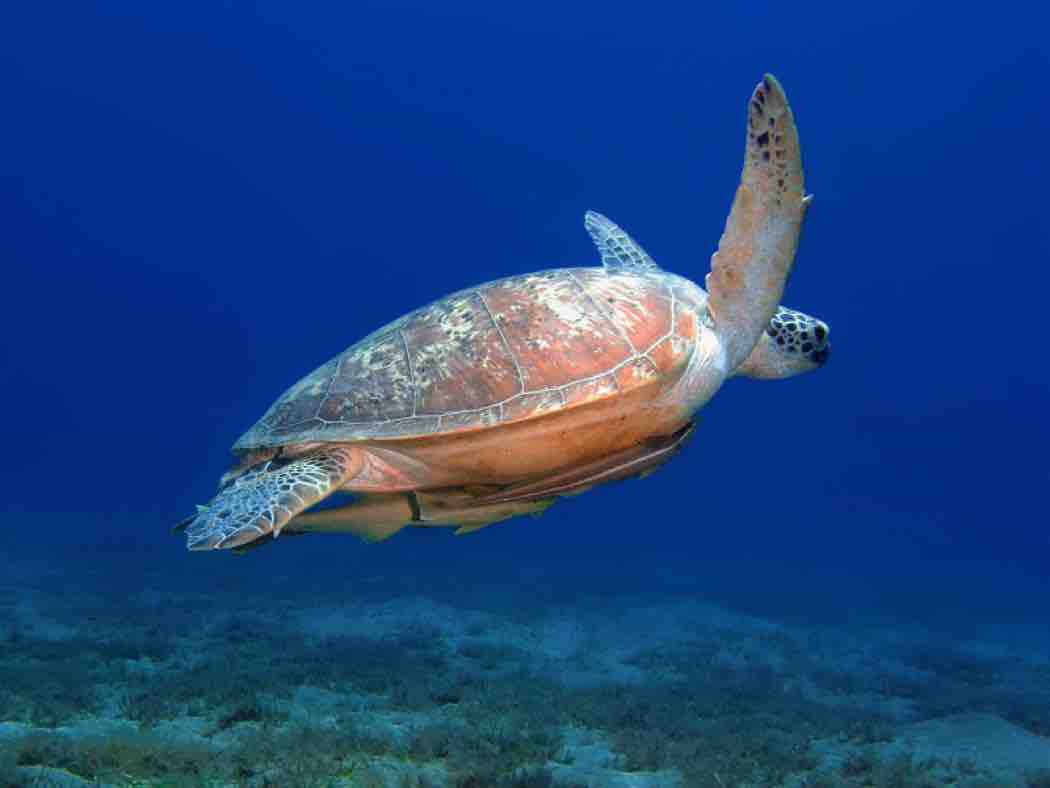 Contact—sea turtle image